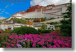 asia, flowers, horizontal, lhasa, palace, potala, tibet, photograph
