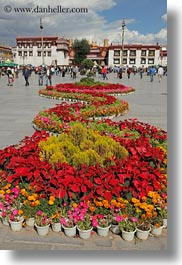 asia, flowers, lhasa, squares, streets, tibet, vertical, photograph