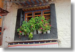 asia, flowers, horizontal, lhasa, tibet, windows, photograph