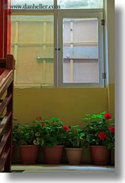 asia, lhasa, plants, tibet, under, vertical, windows, photograph