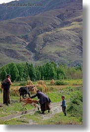 asia, goats, tibet, vertical, womens, yarlung valley, photograph
