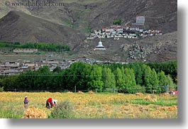 asia, fields, horizontal, riwodechen monastery, tibet, womens, working, yarlung valley, photograph