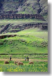 asia, fields, hay, scenics, stacks, tibet, vertical, workers, yarlung valley, photograph