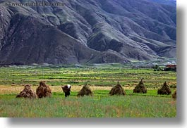 asia, fields, hay, horizontal, scenics, stacks, tibet, workers, yarlung valley, photograph