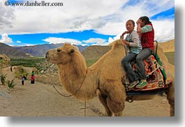 asia, asian, camels, girls, horizontal, people, tibet, yumbulagang, photograph