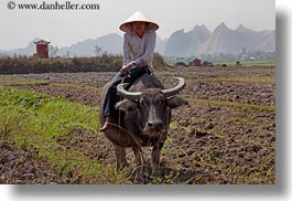 asia, asian, boys, fields, ha long bay, horizontal, people, vietnam, waterbuffolo, photograph