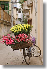 asia, bicycles, bikes, flowers, hanoi, pink, vertical, vietnam, yellow, photograph