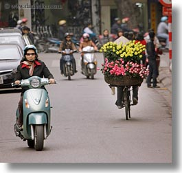asia, bicycles, bikes, flowers, hanoi, pink, square format, vietnam, yellow, photograph