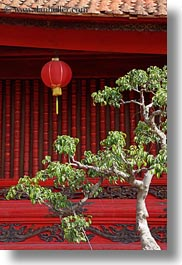 asia, confucian temple literature, gardens, green, hanoi, lanterns, leaves, red, trees, vertical, vietnam, photograph