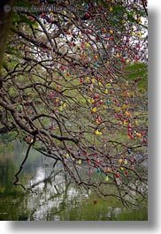 asia, branches, colorful, hanoi, lakes, lightbulbs, vertical, vietnam, photograph