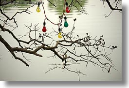 asia, branches, colorful, hanoi, horizontal, lakes, lightbulbs, vietnam, photograph