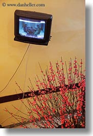 asia, hanoi, plants, red, televisions, vertical, vietnam, photograph