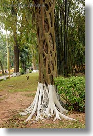 asia, hanoi, roots, trees, vertical, vietnam, vines, wrapping, photograph