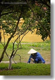 asia, blues, conical, gardeners, gardening, hanoi, hats, people, vertical, vietnam, white, womens, photograph