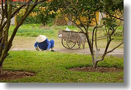 asia, blues, conical, gardeners, gardening, hanoi, hats, horizontal, people, vietnam, white, womens, photograph