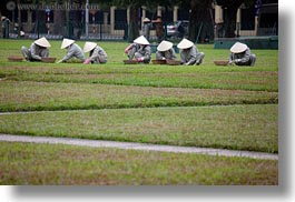 asia, conical, gardeners, gardening, grey, hanoi, hats, horizontal, people, vietnam, white, womens, photograph