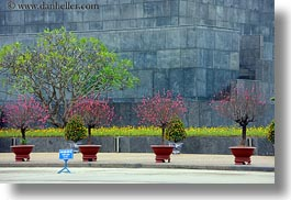 asia, flowers, hanoi, horizontal, potted, presidential palace, vietnam, photograph