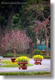 asia, flowers, hanoi, potted, presidential palace, vertical, vietnam, photograph