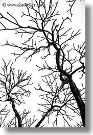 abstracts, asia, black and white, branches, hanoi, tree branches, trees, vertical, vietnam, photograph