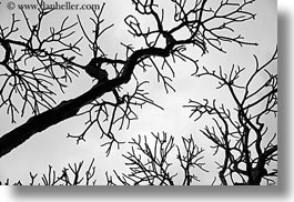 abstracts, asia, black and white, branches, hanoi, horizontal, tree branches, trees, vietnam, photograph