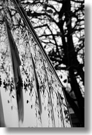 asia, black and white, branches, hanoi, reflections, tree branches, trees, vertical, vietnam, windows, photograph