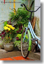 asia, bicycles, bikes, blues, flowers, hoi an, lights, vertical, vietnam, photograph