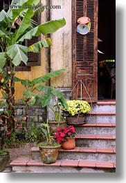 asia, flowers, hoi an, stairs, vertical, vietnam, photograph