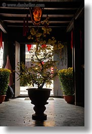 asia, flowers, hoi an, potted, silhouettes, trees, vertical, vietnam, photograph