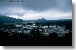asia, fields, flooded, horizontal, landscapes, rice, vietnam, photograph