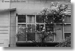 asia, black and white, buildings, horizontal, saigon, trees, vietnam, photograph