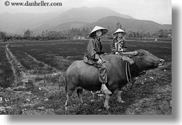 animals, asia, asian, black and white, clothes, conical, hats, horizontal, men, mountains, ox, people, vietnam, villages, photograph