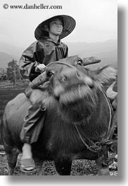 animals, asia, asian, black and white, clothes, conical, hats, men, mountains, ox, people, vertical, vietnam, villages, photograph