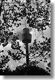 australia, black and white, buildings, leaves, skyscrapers, space needle, structures, sydney, vertical, photograph