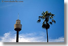 australia, buildings, clouds, horizontal, nature, palm trees, plants, sky, skyscrapers, space needle, structures, sydney, trees, weather, photograph