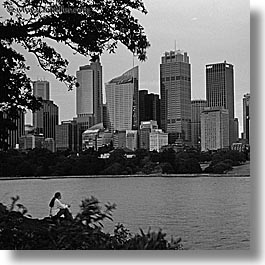 australia, black and white, branches, buildings, cityscapes, nature, people, plants, square format, structures, sydney, trees, womens, photograph