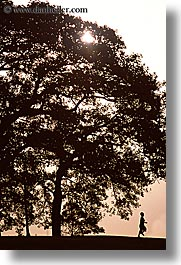 australia, boys, childrens, nature, people, plants, shade tree, silhouettes, sydney, trees, vertical, photograph