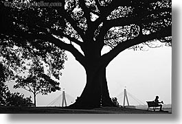 australia, benches, black and white, horizontal, jills, nature, plants, shade tree, silhouettes, sydney, trees, photograph
