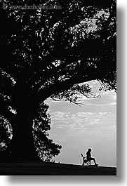 australia, benches, black and white, jills, nature, plants, shade tree, silhouettes, sydney, trees, vertical, photograph