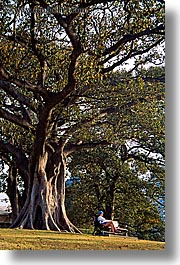 australia, jills, nature, people, plants, shade tree, sydney, trees, vertical, womens, photograph