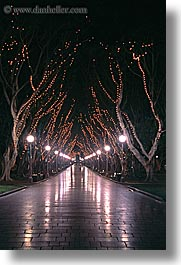 australia, lamp posts, lights, nature, nite, plants, shade tree, streets, sydney, treen, trees, tunnel, vertical, photograph