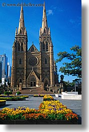 australia, buildings, churches, flowers, nature, religious, st marys cathedral, structures, sydney, vertical, photograph
