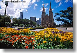 australia, buildings, churches, flowers, horizontal, nature, religious, space needle, st marys cathedral, structures, sydney, photograph