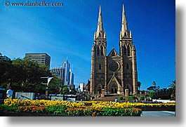 australia, buildings, churches, flowers, horizontal, nature, religious, st marys cathedral, structures, sydney, photograph