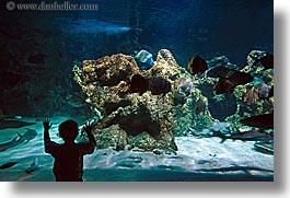 animals, aquarium, australia, boys, childrens, fish, horizontal, people, silhouettes, structures, sydney, taronga zoo, photograph