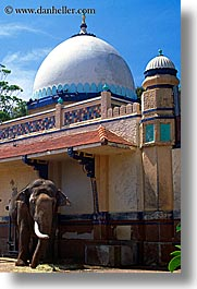 australia, buildings, domes, elephants, structures, sydney, taronga zoo, vertical, photograph