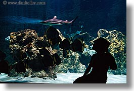 aquarium, australia, horizontal, jil, people, silhouettes, structures, sydney, taronga zoo, womens, photograph