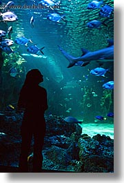 animals, aquarium, australia, fish, jil, people, silhouettes, structures, sydney, taronga zoo, vertical, womens, photograph