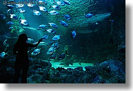 animals, aquarium, australia, fish, horizontal, jil, people, silhouettes, structures, sydney, taronga zoo, womens, photograph