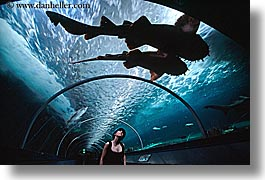animals, aquarium, archways, australia, fish, horizontal, jills, looking, people, sharks, silhouettes, structures, sydney, taronga zoo, womens, photograph
