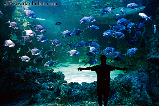 aquarium fishes images. man-sil-aquarium-fish.jpg